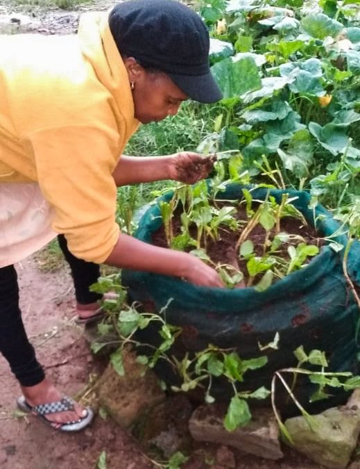 Creating Sustainable Kitchen Gardens With Abby