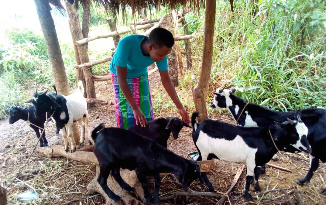 Animal Husbandry in Uganda