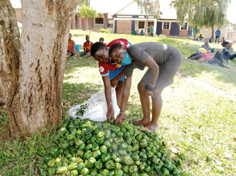 Thriving in Horticulture, Uganda